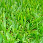 Teorema egrégio em folha de grama