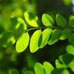 Teorema egrégio em uma folha de árvore